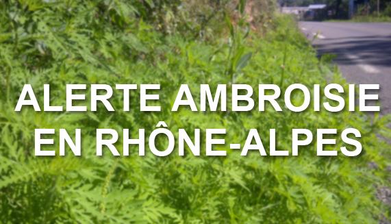 ambroisie_alerte